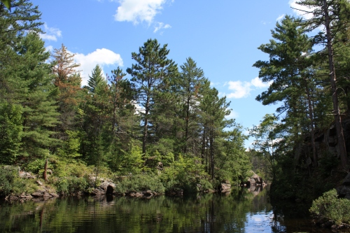 Book - Johns lake and trees