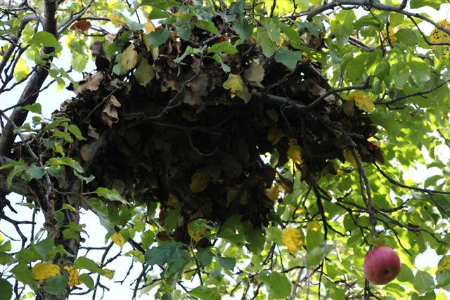 Blog - close up of Squirrel nest