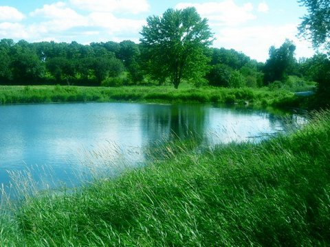 Blog - Pond and trees