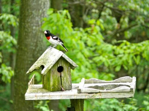 Birdhouse by Jean Long