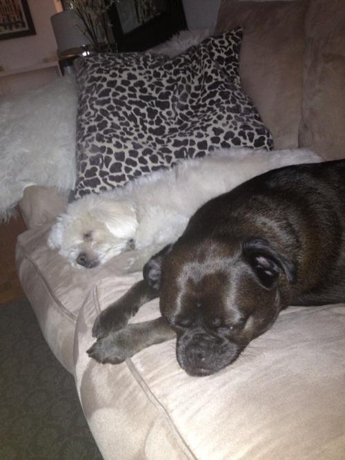 Julius and Dawson Fast Asleep