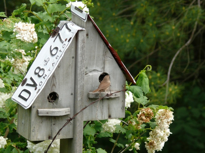 Birdhouse with Drivers' License roof by J. Long