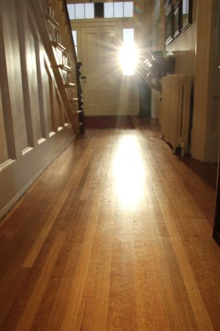Sunshine on Hardwood