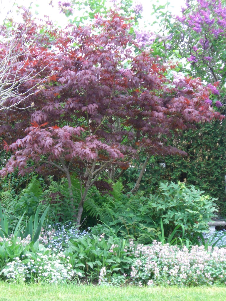 Blog Photo - Spring Trees and Flowers