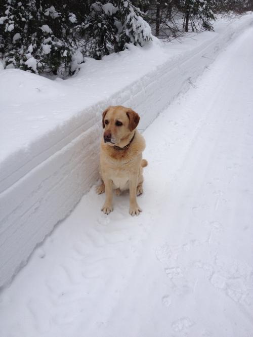 Blog Photo - Bailey in Snow