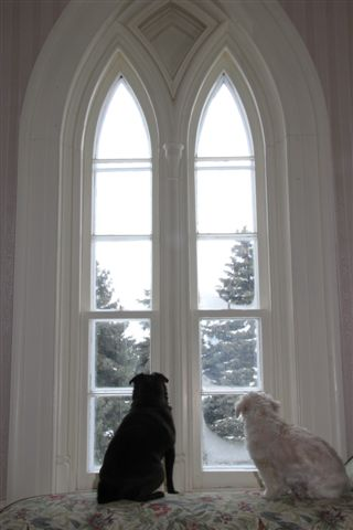 Blog Photo - Doggies in window