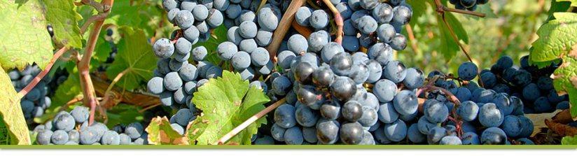 Image via thecountywines.com