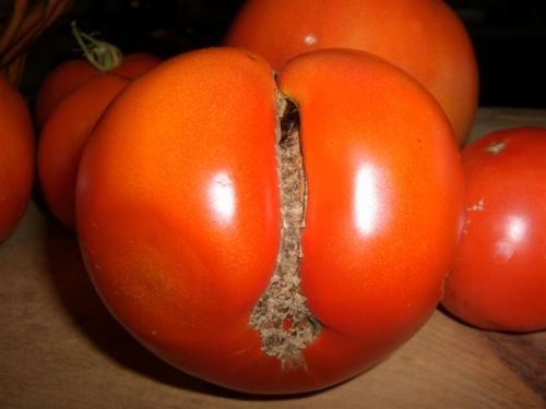 Blog Photo - Tomato