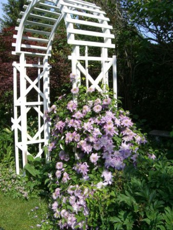 Blog Photo - Clematis on Arbor