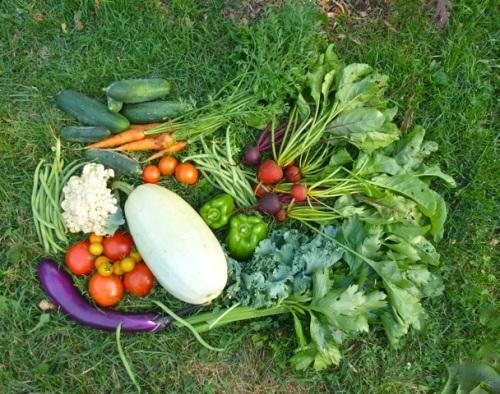 Blog Photo - Garden Produce
