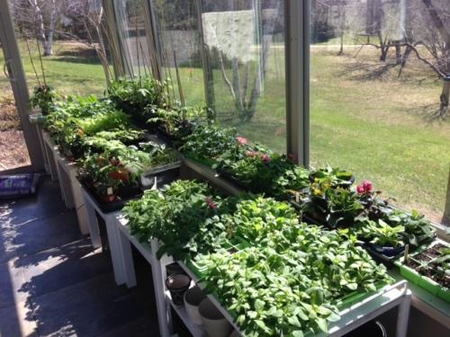 Blog Photo - Val Homegrown Seedlings