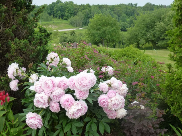 Blog Photo - Val Peonies on hillside