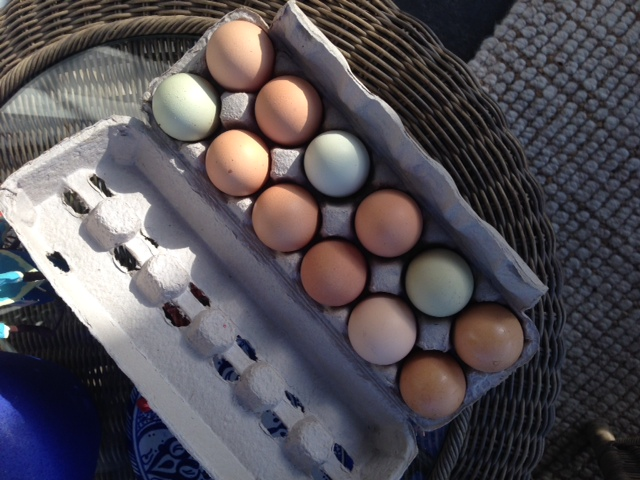 Blog Photo - Val Rainbow eggs
