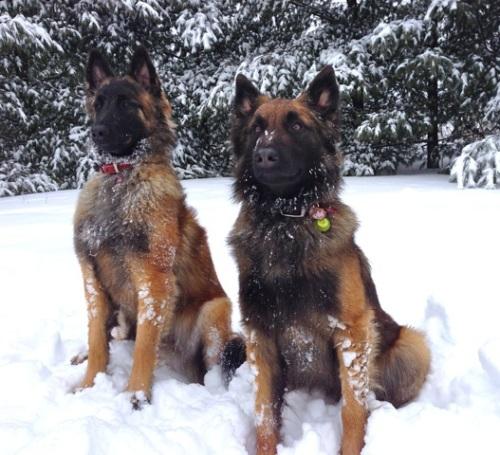 Blog Photo - Vals dogs1