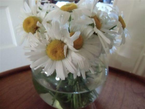 Blog Photo - flowers white daisies in vase