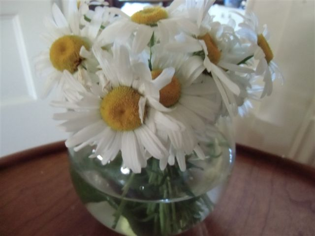 Blog Photo - flowers white daisies in vase