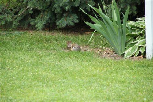 Blog Photo - Rabbit cleans self