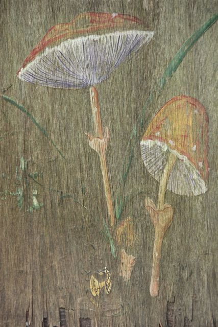 Blog Photo - Rabbit Painting Mushrooms