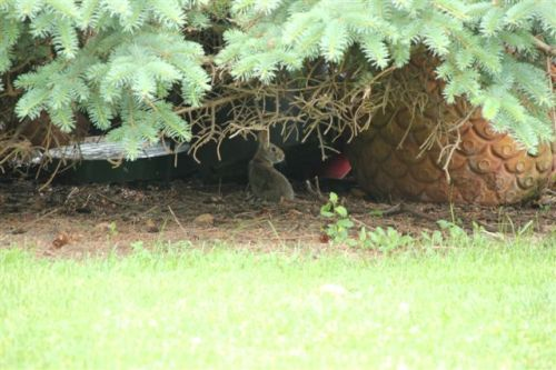 Blog Photo - Rabbit thinks he's hiding