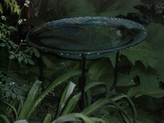 Blog Photo - Rainy birdbath