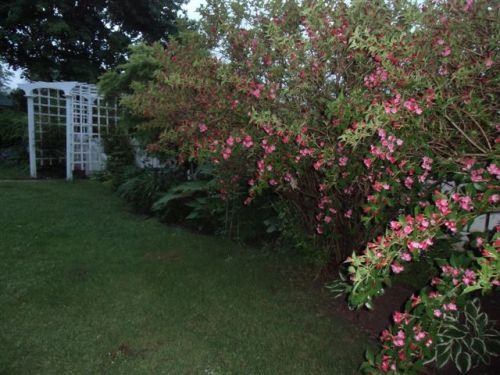 Blog Photo - Rainy Garden with Flowering shrubs