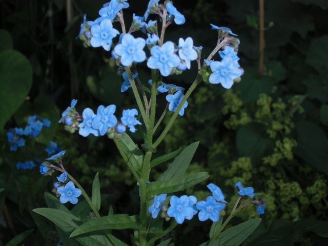 Blog Photo - Blue Something CU