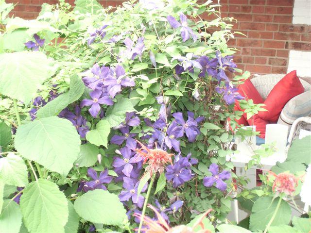 Blog Photo - Clem Purple