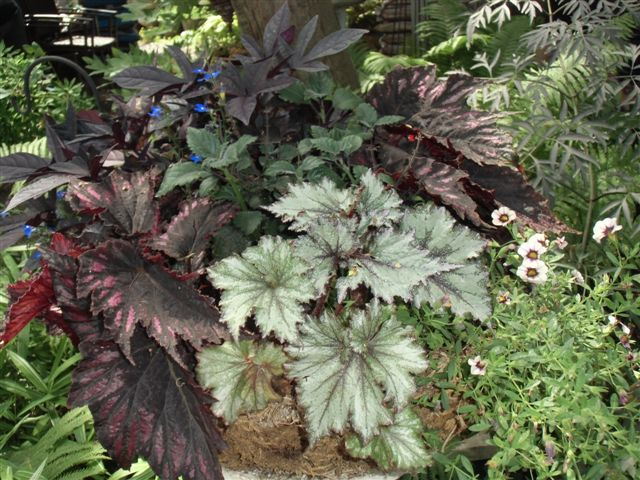 Blog Photo - Gail's foliage plants 1