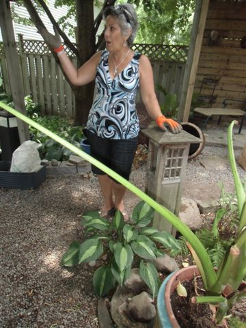 Blog Photo - Gails Garden Gail talks