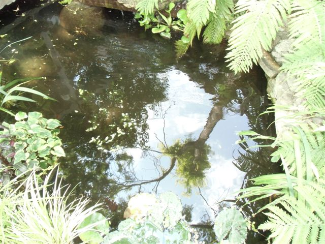 Blog Photo - Gail's Garden Pond - Tree reflected
