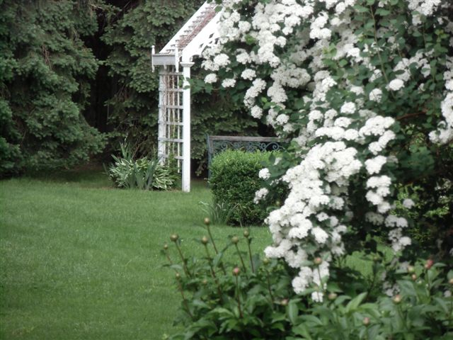 Blog Photo - Garden Bridal wreath