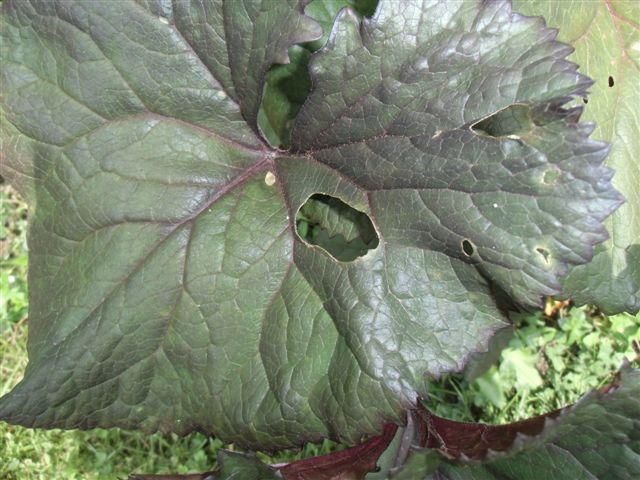 Blog Photo - Garden bugs1
