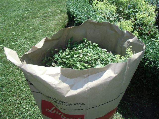 Blog Photo - Garden compost bags