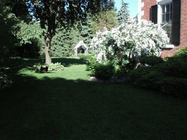 Blog Photo - Garden in shadows