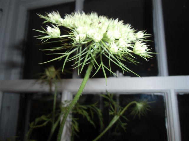 Blog Photo - Garden Lace 5