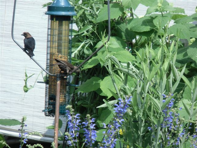 Blog Photo - Garden rain - two birds at feeder