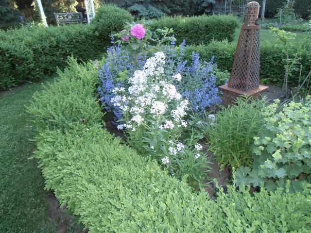 Blog Photo - Garden - Roses in Boxwood Garden