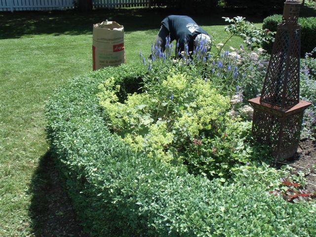Blog Photo - Garden - working in Garden 2