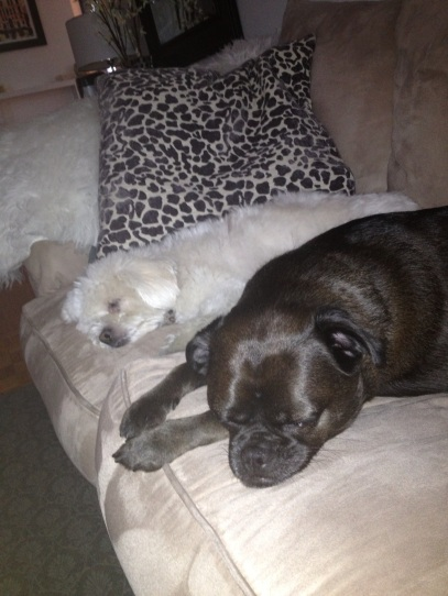 Blog Photo - Julius and Dawson Sleeping