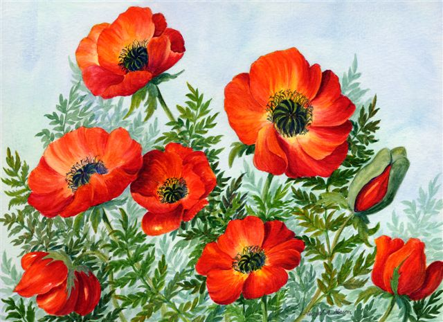 Blog Photo - Muriel Red Poppies