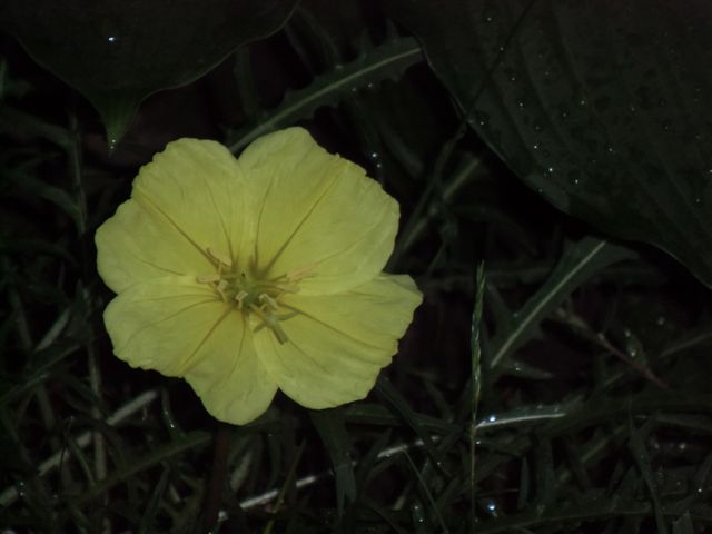 Blog Photo - Nightbloomer1