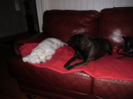 Blog Photo - Two Small Dogs