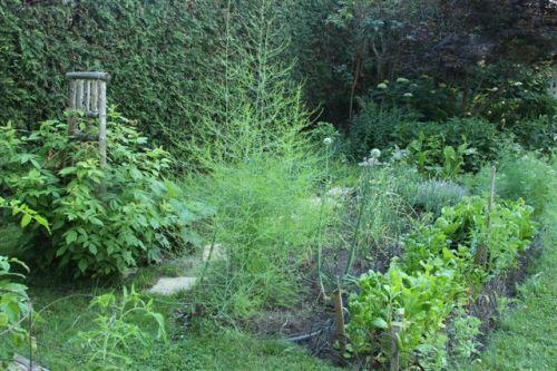 Blog Photo - Veggie Garden Longshot2 with Asparagus