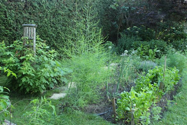 Blog Photo - Veggie Garden Longshot2 with Asparagus
