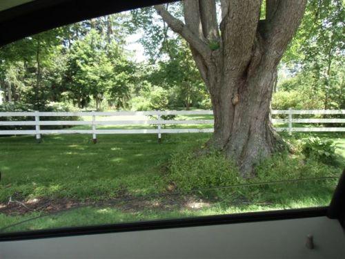 Blog Photo - Bond Head huge tree and fence