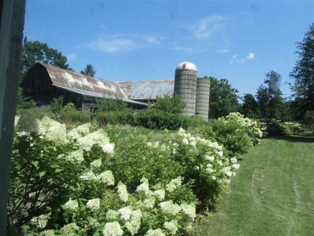 Blog Photo - Ebor House Barns and hydrangea