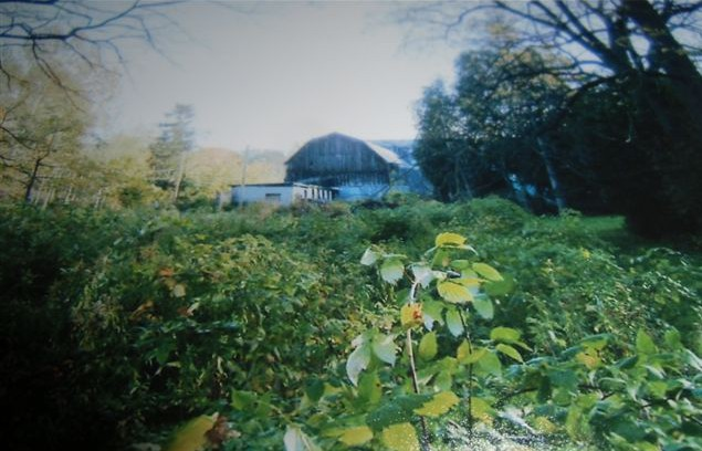Blog Photo - Ebor House overgrown lawn
