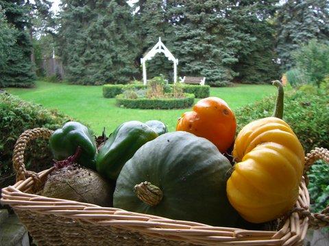 Blog Photo - Garden harvest Basket tomatoes pumpkin
