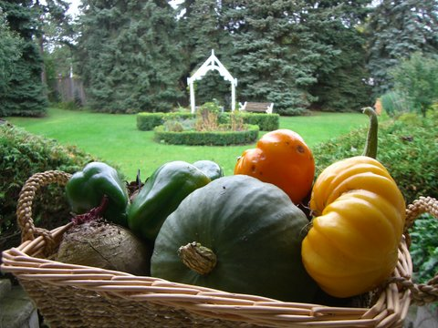 Blog Photo - Garden harvest Basket tomatoes pumpkin