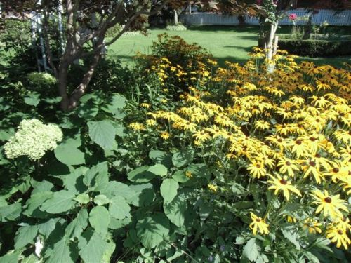 Blog Photo - Garden Tall Flowers Everywhere
